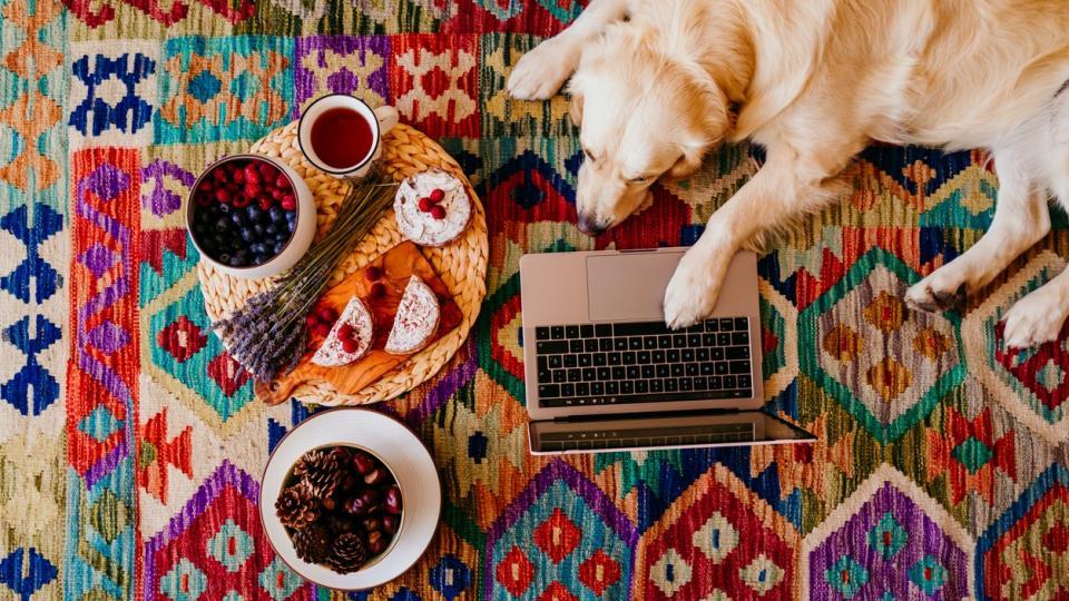 дневен куче чай кафе