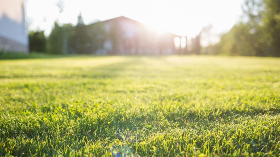 """Доброволци окосиха трева в """"Красно село"""" и получиха глоба"""