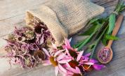 7 билки при слънчево изгаряне
