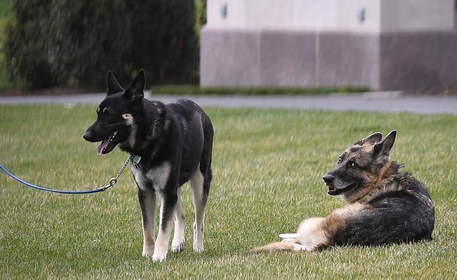Кучетата на семейство Байдън