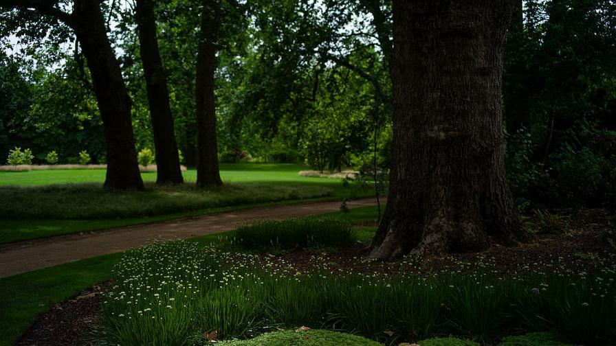 градините на Бъкингамския дворец
