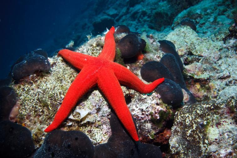 Морски звезди