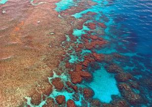 Големият бариерен риф засега няма да бъде класифициран като застрашен