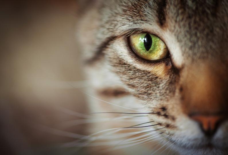 <p><strong>Котка</strong></p>  <p>Пречистването на дома е най-добре да се случи преди или още когато се нанесете, ако имате тази възможност. Една от практиките, които използват най-вече руснаците, е да пуснат котка в жилището преди да се нанесат там. Най-добре е да имате вече някаква установена връзка с животното. Пуснете котката през входната врата и проследете кои места харесва и кои избягва. Тя ще събере част от негативната енергия и ще ви покаже кои кътчета от дома трябва да пречистите повече от останалите.</p>  <p>Ако сте в дома от години, отново наблюдавайте поведението на котката в различните стаи и кътчета.</p>