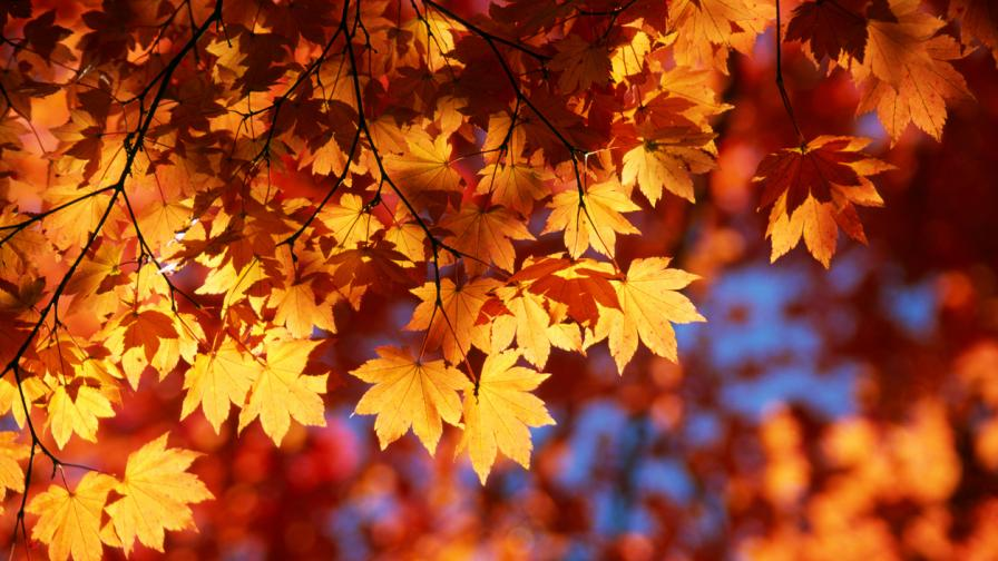 Какво ще е времето у нас през есента