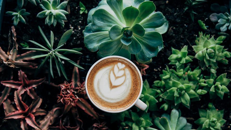 хороскоп кафе