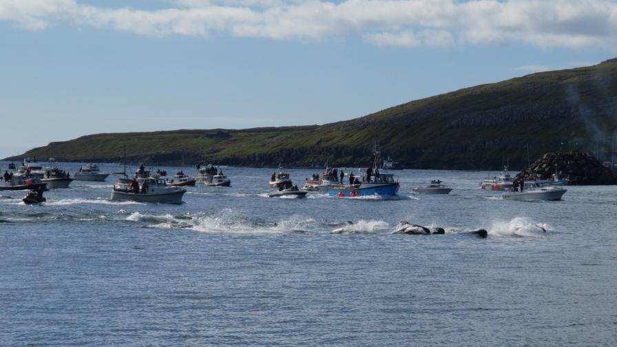 Лов на китове край Фарьорските острови