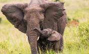 <p>Слон майка уби крокодил, за да спаси малкото си (ВИДЕО)</p>