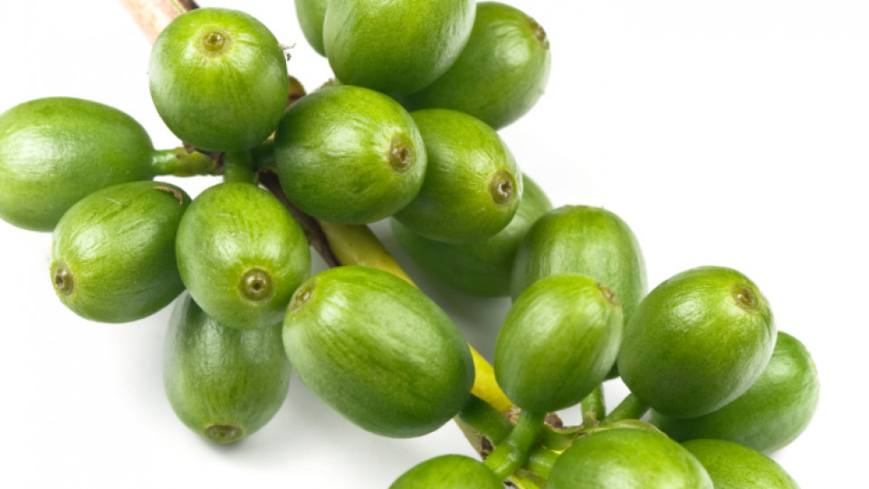 Зелени зърна кафе
