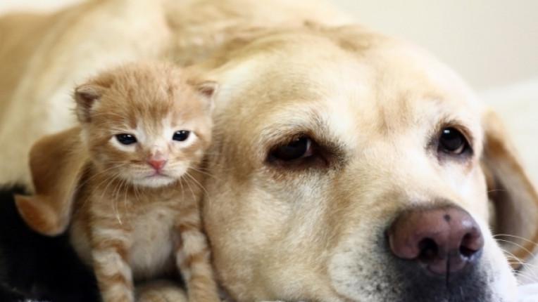 организация Четири лапи хуманност защита на животните тестване козметични продукти