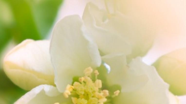 Из edna щастие любов раздяла изповед липса самота преживяване лична