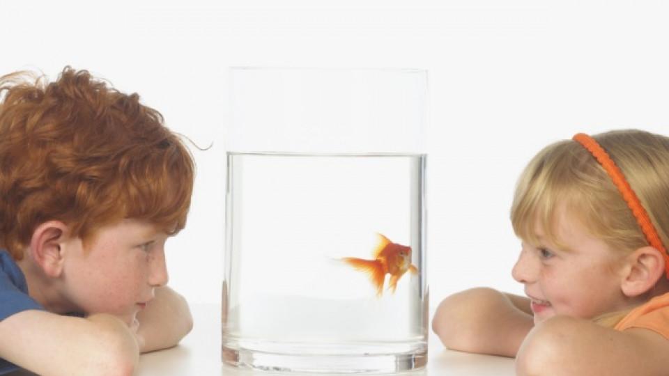 Рибата предпазва децата от алергии
