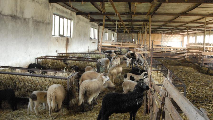 ЕК одобри земеделските доплащания за 2009-а