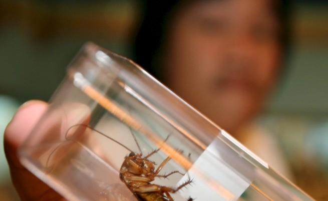 Хлебарките ще преборят и глобалното затопляне