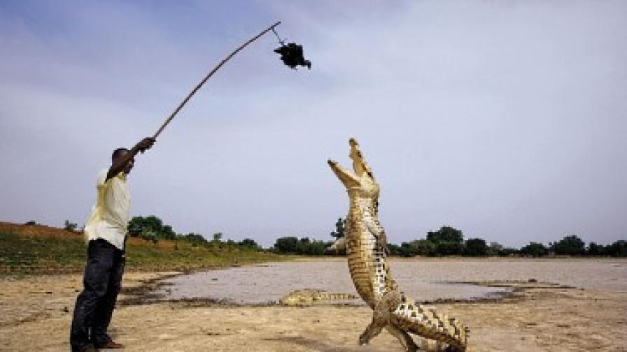 В Буркина Фасо почитат крокодилите от векове