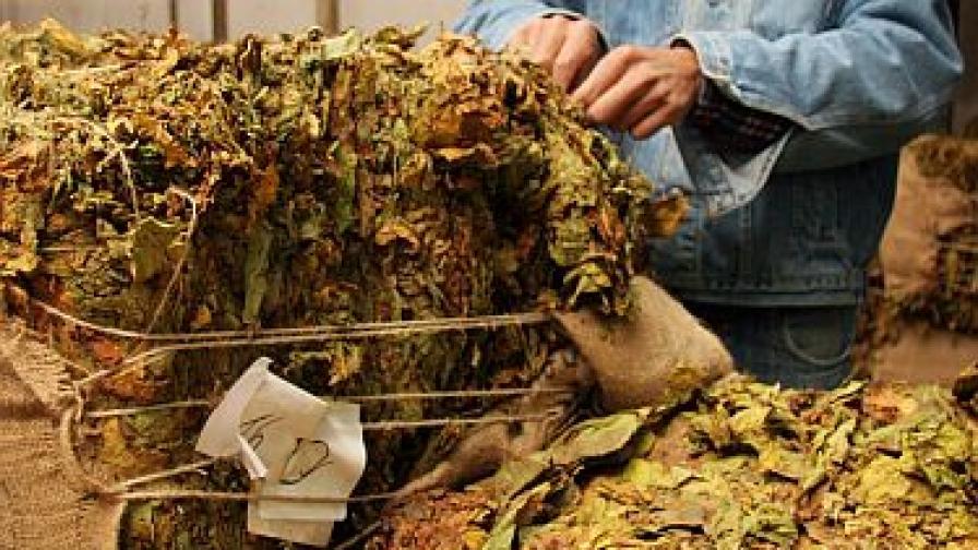 ЕК разреши на България да изплати 116 млн. на тютюнопроизводителите