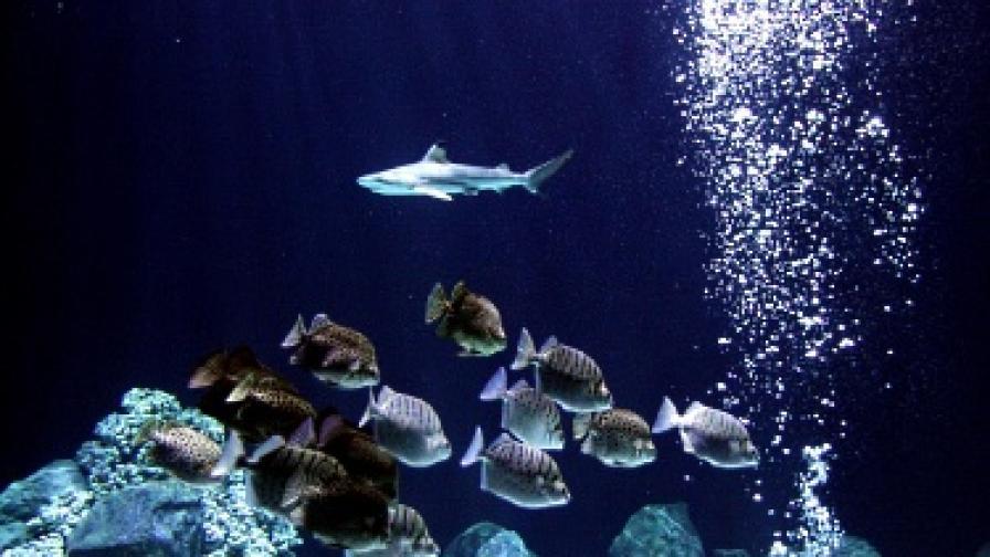 Дете преби акула