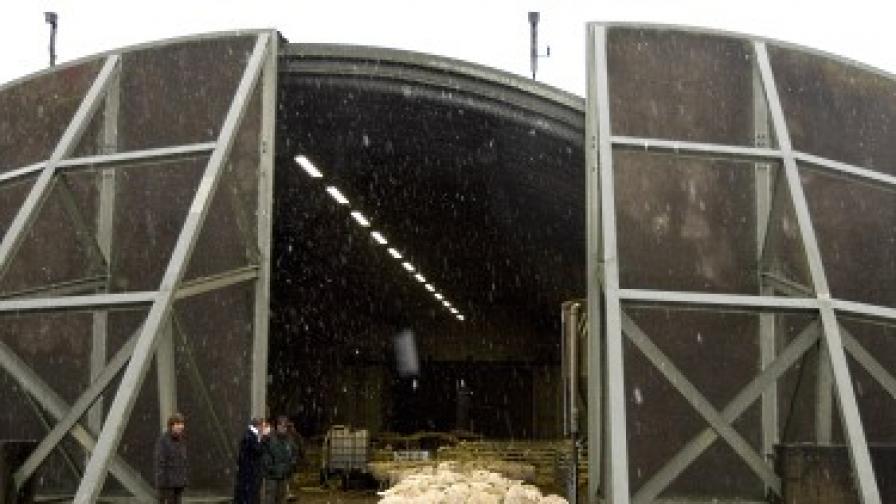 8000 овце перат румънски пари у нас