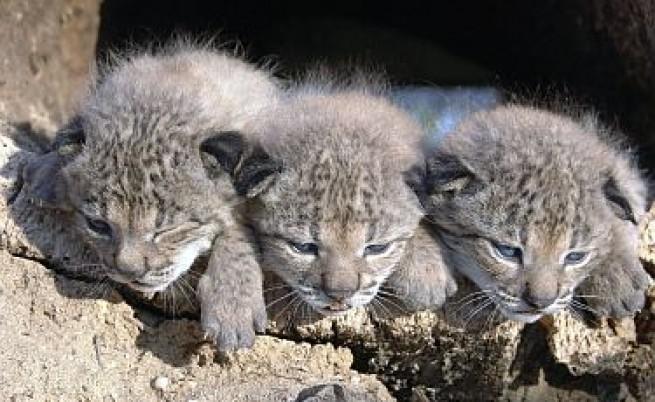 Признаха: Изчезването на видове е неудържимо