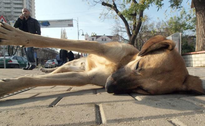 Осем кучета агонизираха в самия център на Перник