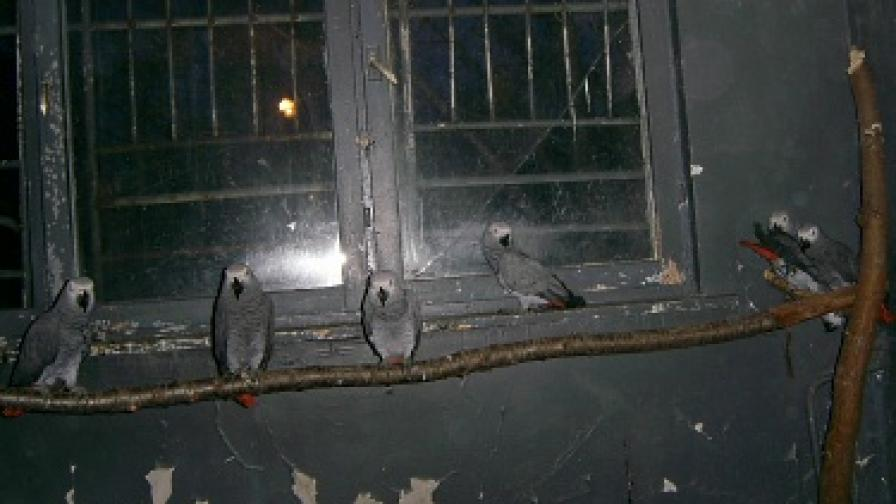 Спасиха 107 папагала на летището
