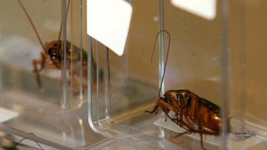 Хлебарките хапват само добра храна