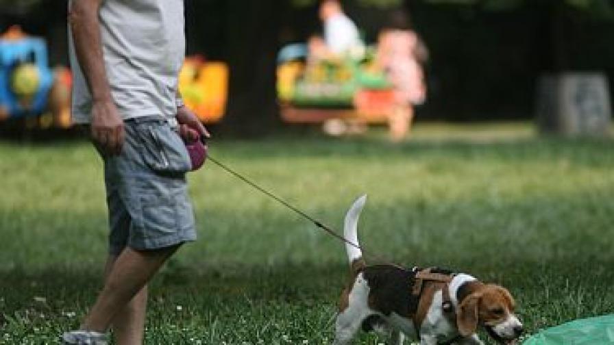 Деца разхождат кучета само с писмено родителско съгласие