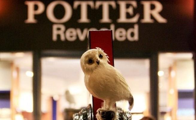 Сови изчезват заради Хари Потър?