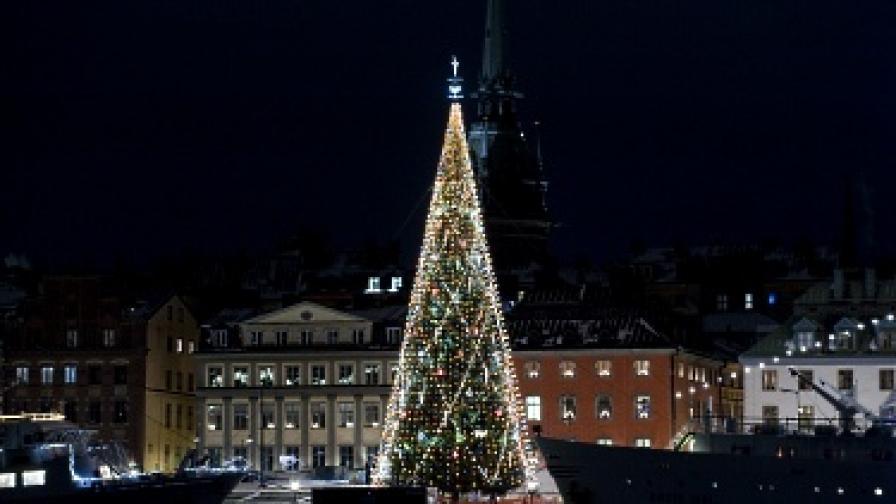 Коледна елха светва от целувка