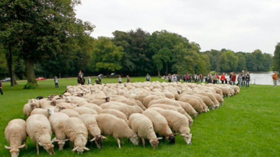 Овцата Доли се прероди