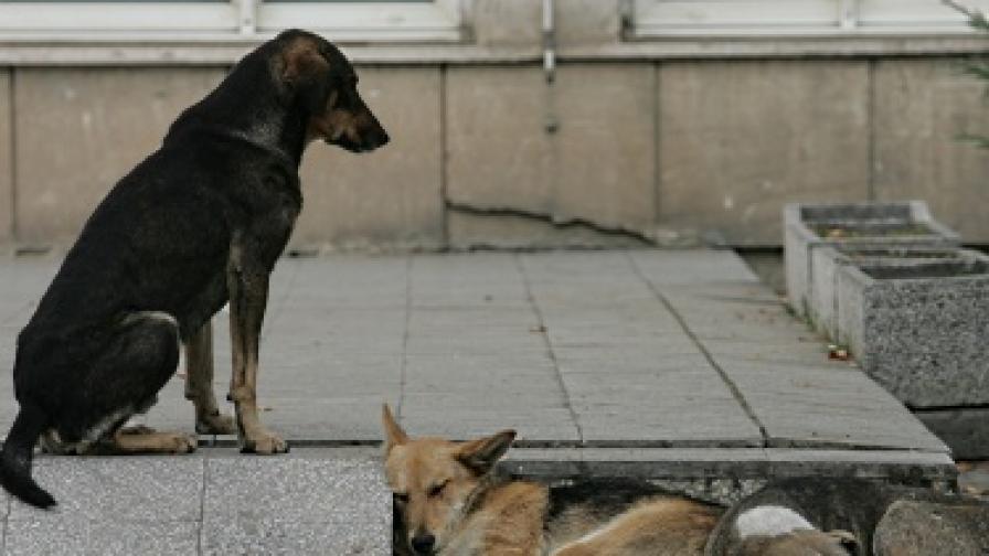 """""""Екоравновесие"""": Бездомни кучета в София ще има до 2014 г."""
