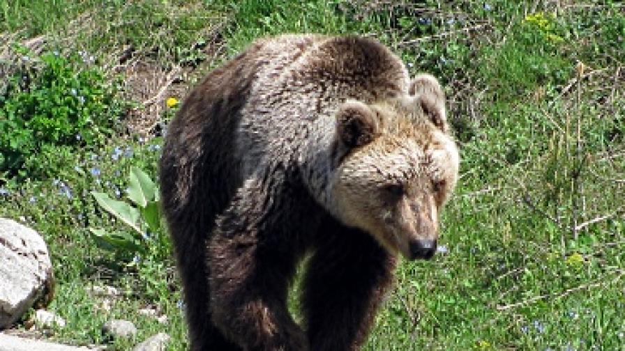 Екоминистерството ще плати 130 000 лв. обезщетение за убит от мечка