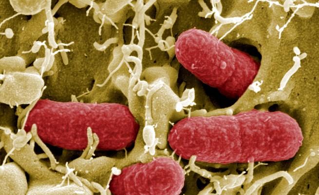 МЗХ: У нас няма заразени краставици