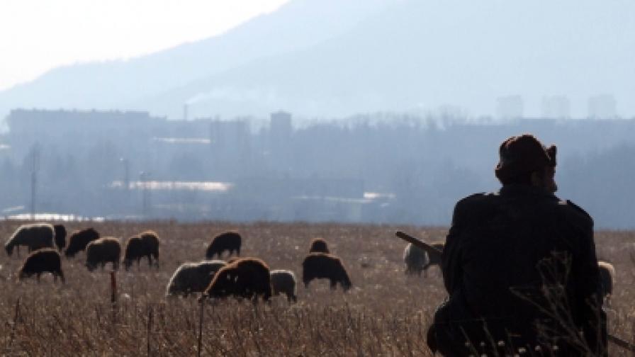 В Турция: Заплата 1100 евро, ако станеш овчар