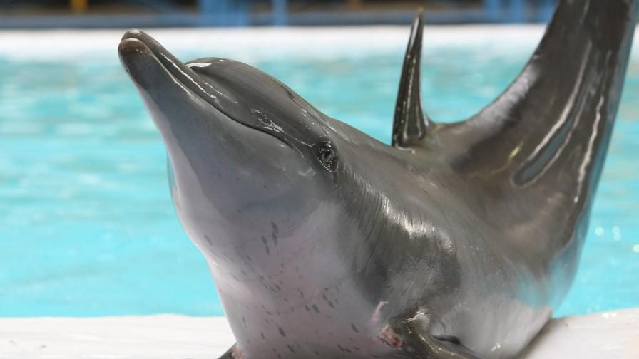 Чудодейното зарастване на рани при делфините