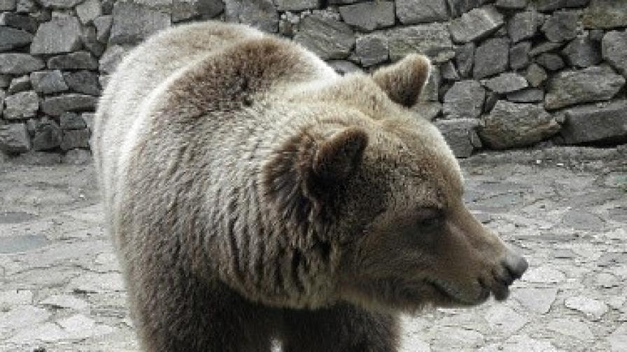 Нападната от мечка осъди МОСВ за 50 хил. лв.