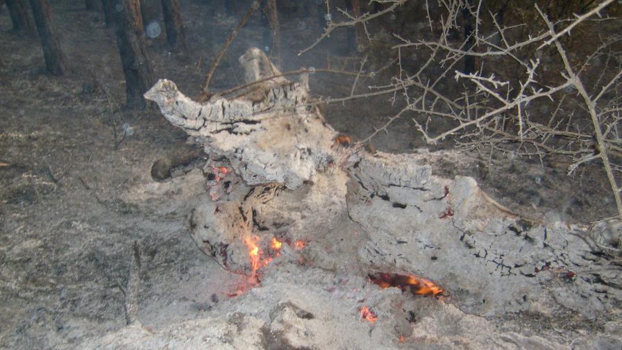 Огромен пожар между Кюстендил и Благоевград