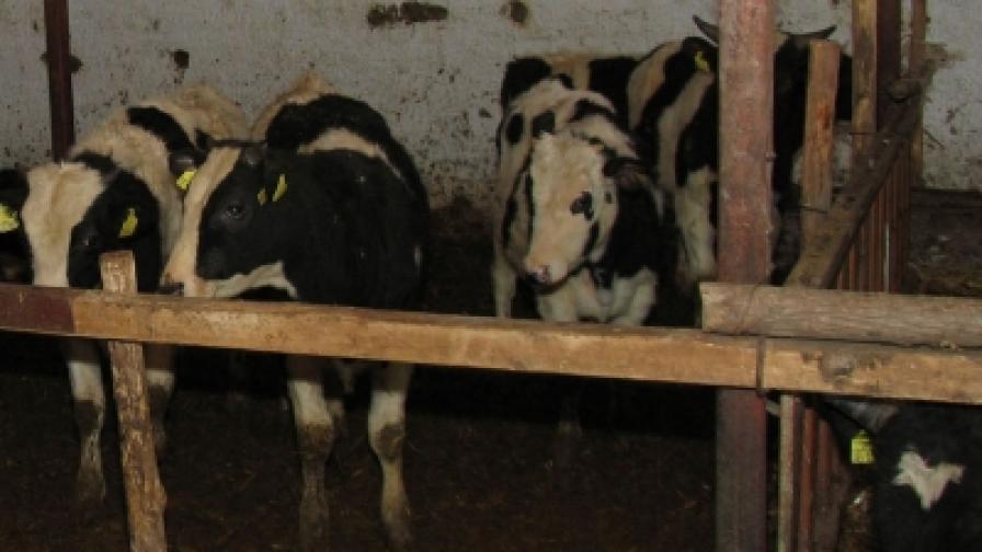 Последна отстрочка за българските фермери