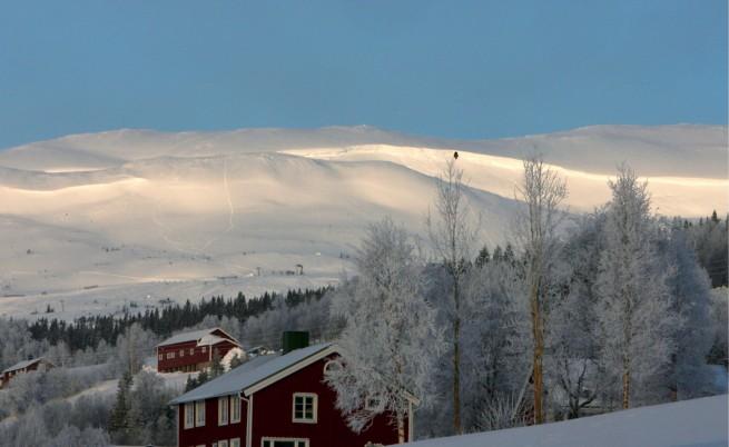 Цъфнали цветя и птички вместо зима в Скандинавия