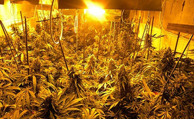 Полицаи откриха подземна и супермодерна ферма за канабис в Нови пазар
