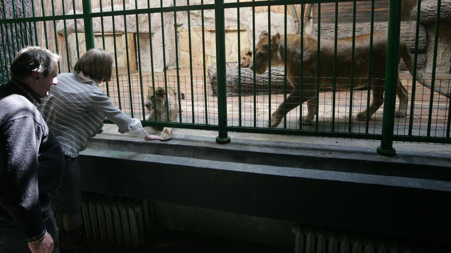 Какво ново в зоопарка по Коледа и след Нова година