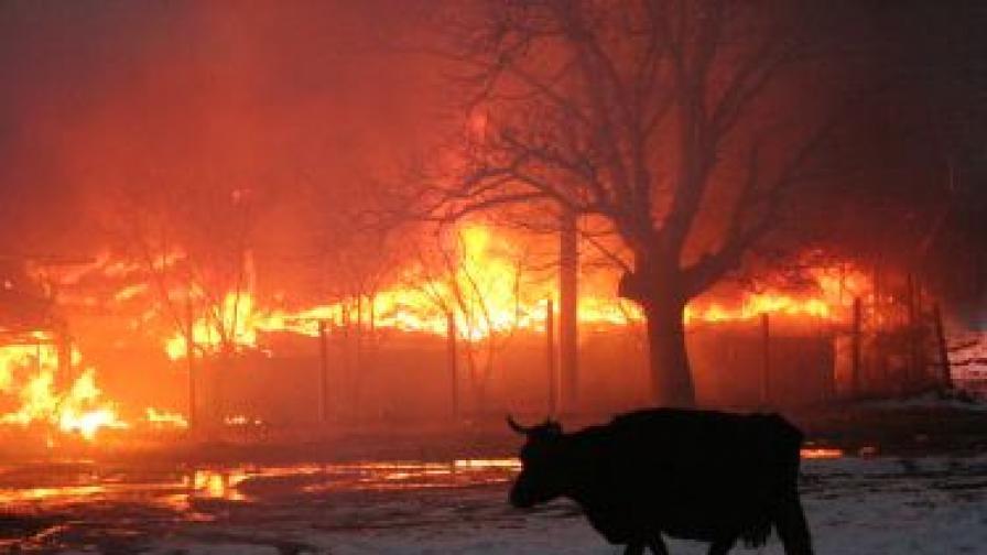 30 крави са изгорели при пожар в с. Енина