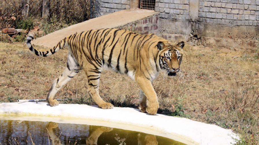 Командоси ще пазят тигрите в Южна Индия
