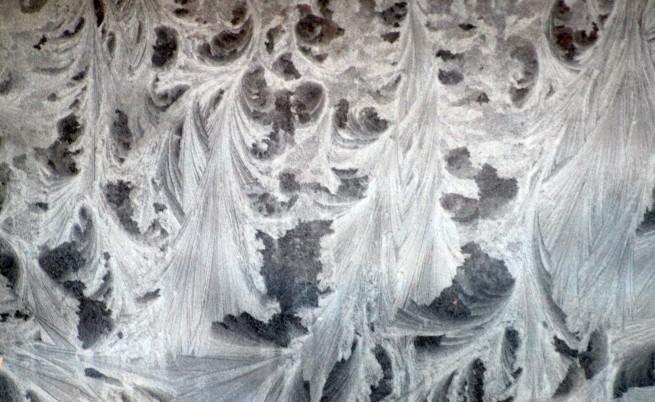 Леденият брулещ вятър застрашава пшеничните ни посеви