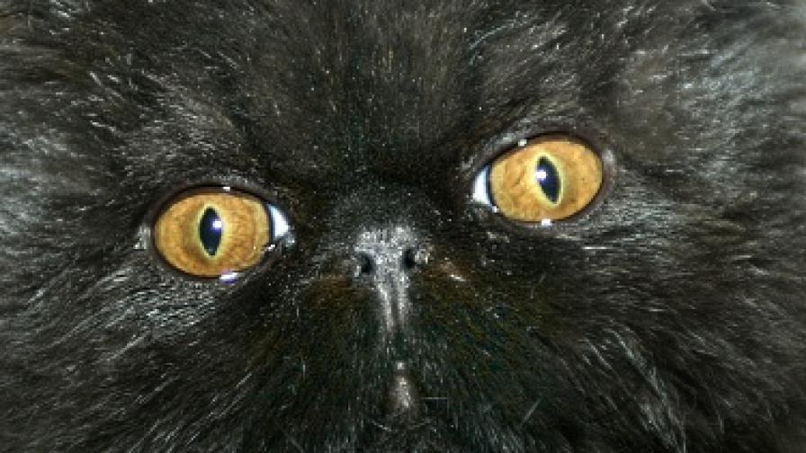 Спасителна акция на минус 11 градуса заради... котка