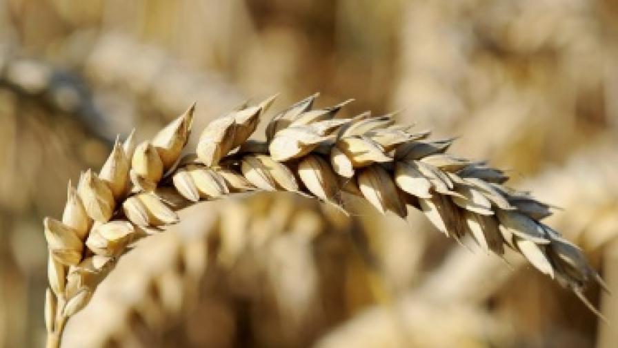 Цените на храните растат в световен мащаб