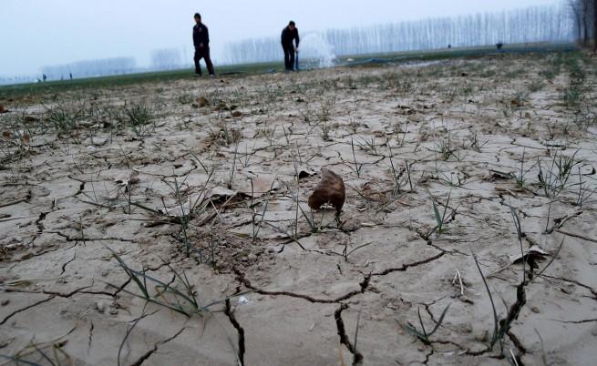 Надежда за гладните: Пшеница, която обича солта и не е ГМО
