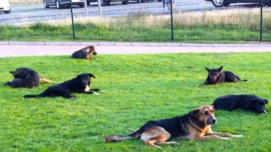 Нови обещания за бездомните кучета в София