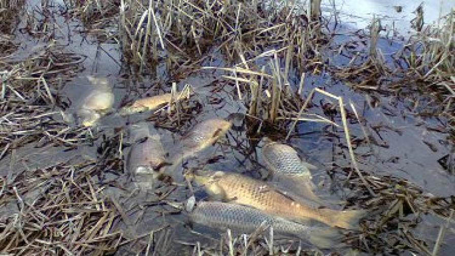 Тонове мъртва риба изплува в радомирски резерват