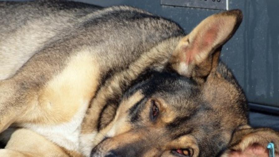 Безмълвно черно шествие в защита на кучетата